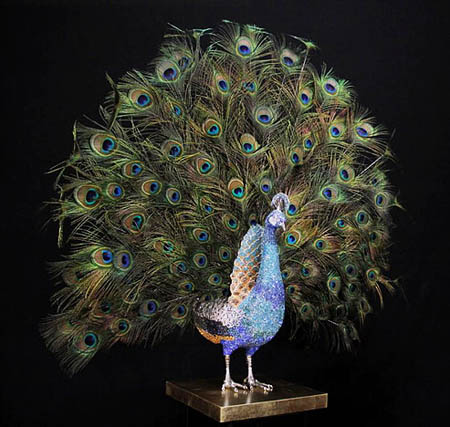 BLUE PEACOCK OPEN FEATHERS by Clarita Brinkerhoff Ocean Blue Galleries