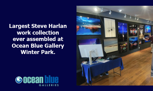 Largest Steve Harlan Collection at Ocean Blue Gallery Winter Park